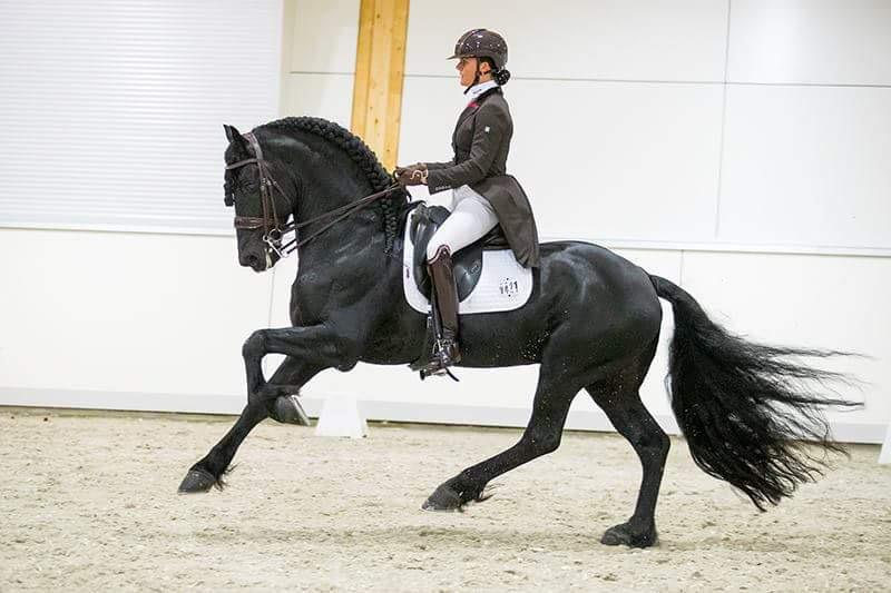 Mentale training paardensport